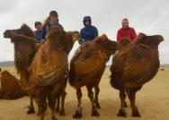 Mongolia - camel riding