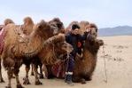 Mongolia - camels