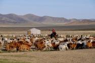 Mongolia - herder