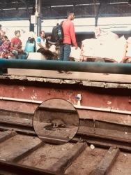 India - train 1