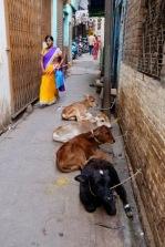 Varanasi10