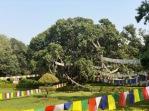 Nepal_Lumbini3
